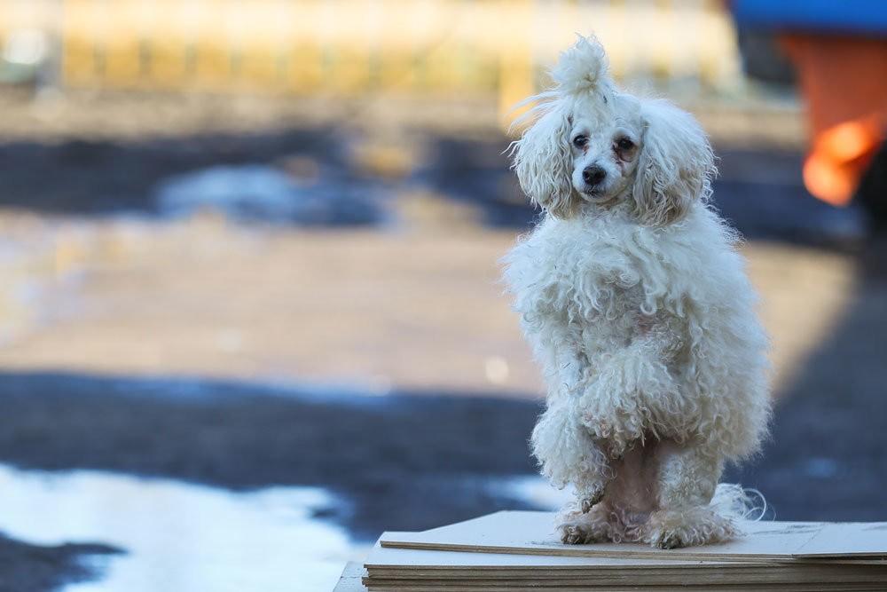 Ветеринар рассказал, как не заболеть COVID-19 после прогулки с животным